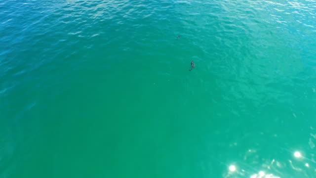 海ではしゃいでください。 - ネズミイルカ点の映像素材/bロール