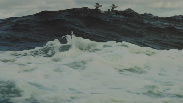 from a vessel in rough sea: birds and waves - rough stock videos & royalty-free footage