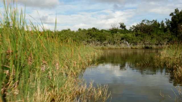 pov from airboat in the everglades, florida, usa - spoonfilm stock-videos und b-roll-filmmaterial