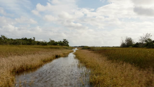 pov from airboat roaming through sawgrass prairies in the everglades, florida, usa - ökotourismus stock-videos und b-roll-filmmaterial