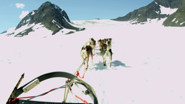 pov from alaskan dogsledding team base camp alaska - malamute stock videos and b-roll footage