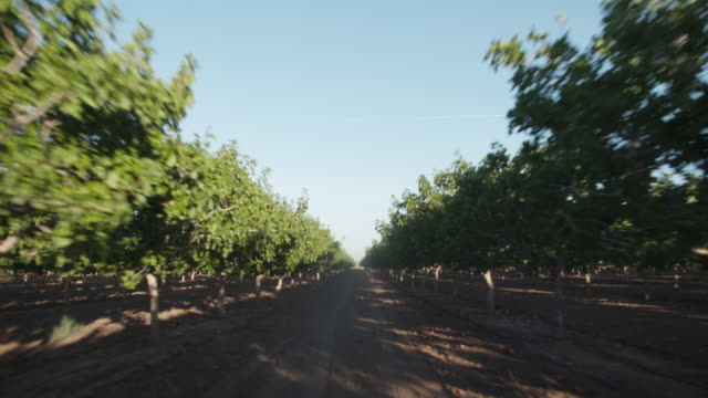 pov from back of plow through orchard - albero da frutto video stock e b–roll
