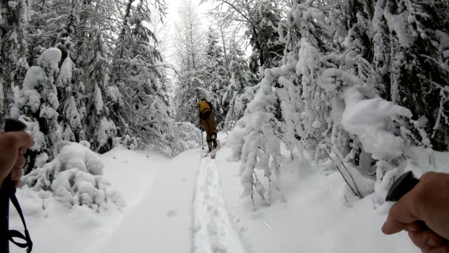 pov from backcountry skier to companion setting tracks through the forest - winter sport stock videos & royalty-free footage