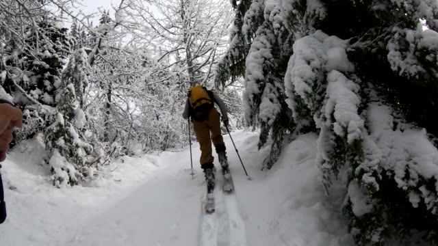 pov from backcountry skier to companion setting tracks through the forest - footpath stock-videos und b-roll-filmmaterial