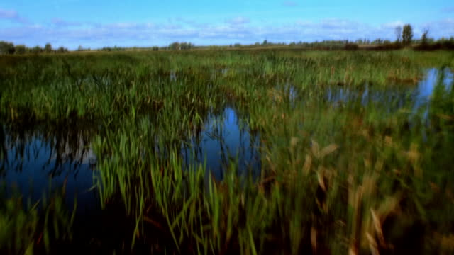 pov from boat floating on swamp - bulrush stock videos & royalty-free footage