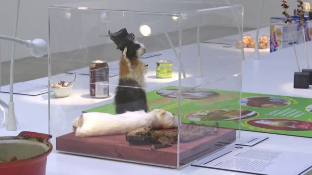 from bull's testicles to wine flavoured with mice some of the world's most unusual dishes are on display in the disgusting food museum currently... - nantes stock videos & royalty-free footage