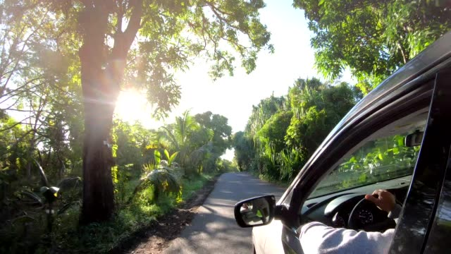 pov from car moving along rural road, in forest - lush stock videos & royalty-free footage