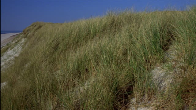 pan from grass on sand dunes to canopied chairs on a beach.  island of sylt, schleswig-holstein, germany - nordfriesische inseln stock-videos und b-roll-filmmaterial