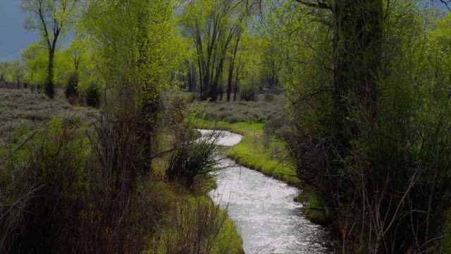 zoom out from medium to wide shot winding creek lined by bushes and trees with tetons in background, grand teton national park, wyoming - grand teton national park stock videos & royalty-free footage