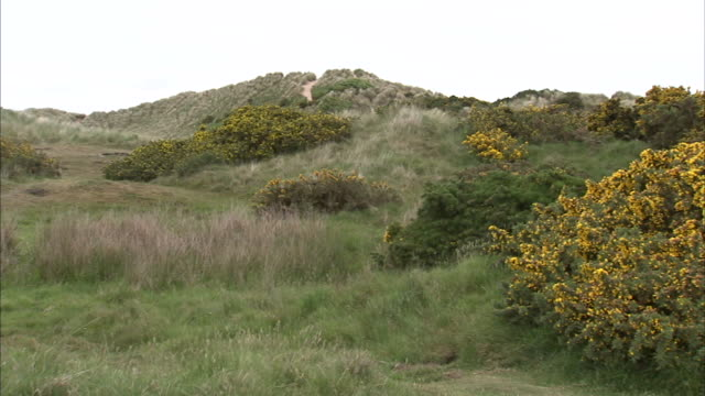 from public boardwalk winding up into dunes behind sand dunes w/ marram grass across grassland w/ colorful changing color foliage reverse pan no... - marram grass stock videos & royalty-free footage
