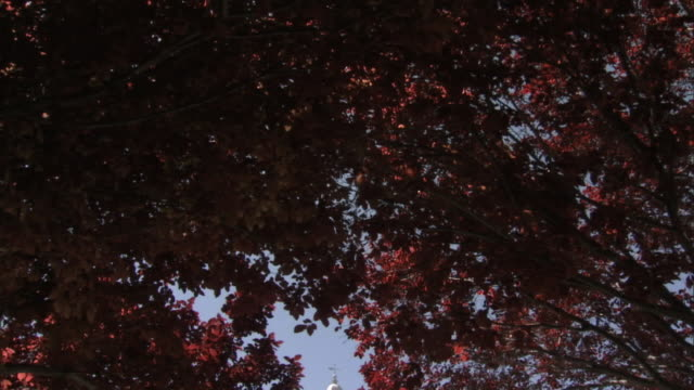 from red tree leaves to ws st george utah temple of latter day saints clear sky bg ut mormonism religion - mormonism stock videos & royalty-free footage