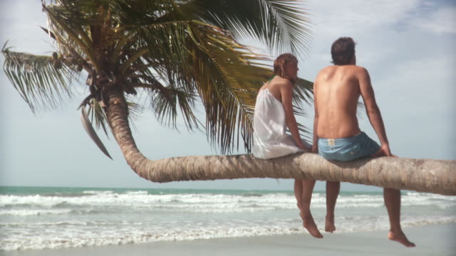 ws rv td from sky to young man and woman sitting on palm tree over beach with waves rolling in/ scarborough, tobago, trinidad and tobago - badeshorts stock-videos und b-roll-filmmaterial