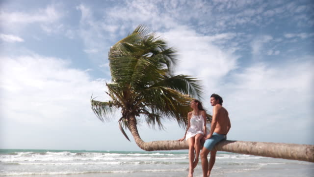 ws td from sky to young man and woman sitting on palm tree over beach with waves rolling in/ scarborough, tobago, trinidad and tobago - swimming shorts stock videos & royalty-free footage