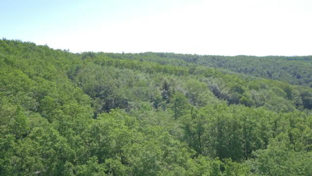 Vista aerea dall'albero rami di una vasta foresta area