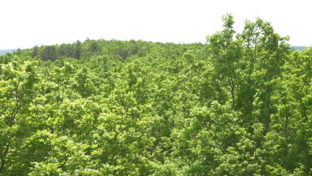 vídeos de stock, filmes e b-roll de vista aérea de árvores ao verde interna da floresta - inclinando se