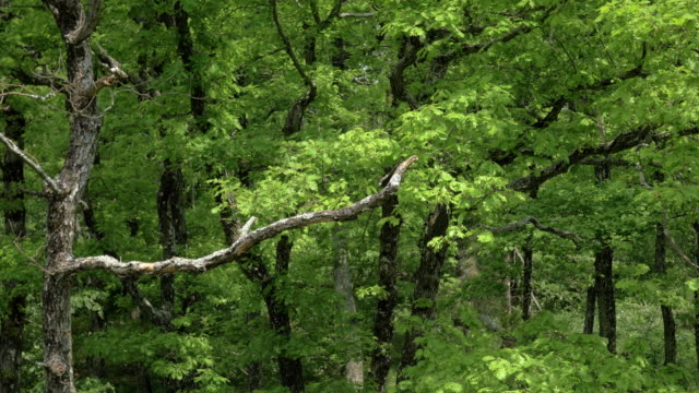 aerial from treetops to the understory - branch stock videos & royalty-free footage