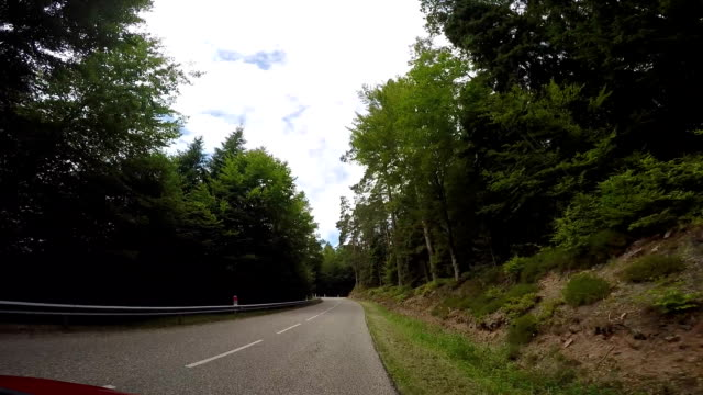 POV from vehicle ad it drives along forest road