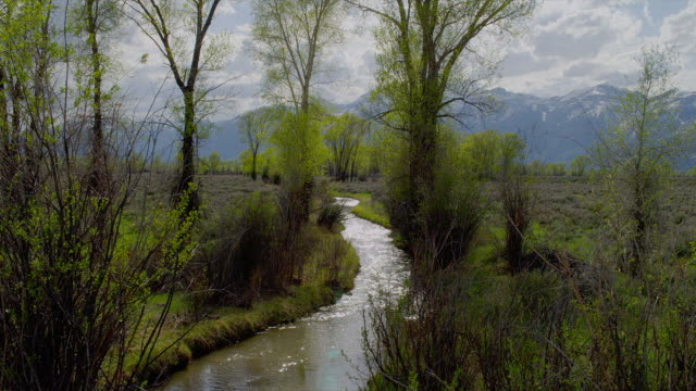 zoom in from wide to medium shot winding creek lined by bushes and trees with tetons in background, grand teton national park, wyoming - grand teton national park stock videos & royalty-free footage