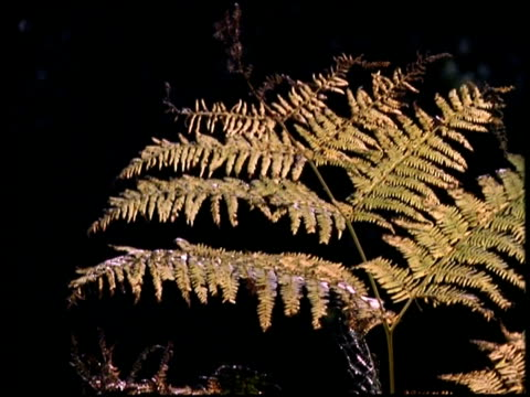 cu frond of bracken, autumn - frond stock videos & royalty-free footage