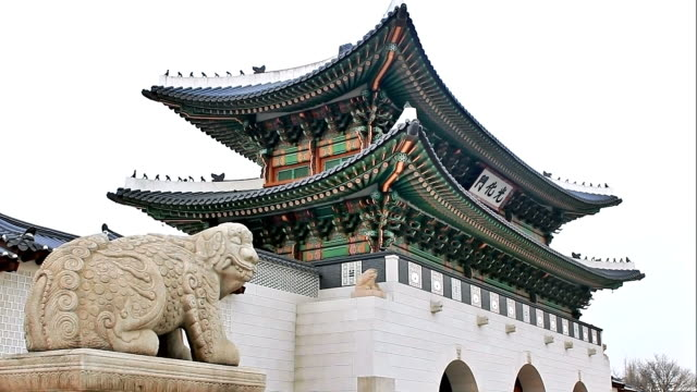 ms zi front gate of gyeongbokgung royal palace / seoul, south korea - animal representation stock videos and b-roll footage
