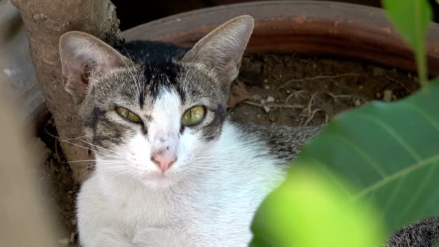 front view of thai cat face under the tree - under her feet stock videos & royalty-free footage