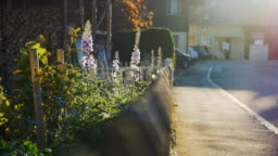 Front Yard Flowers, Picket Fence, and Street