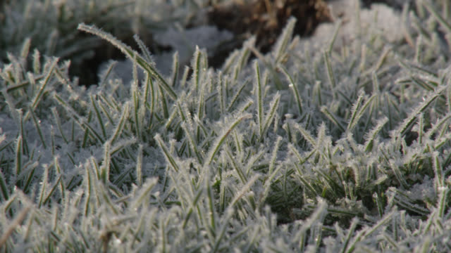 frost covered grass in field at sunrise, staffordshire, england - frost stock videos & royalty-free footage