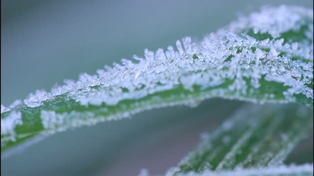 frost covers a green blade of wild grass in nagoya, japan. - frozen water stock videos & royalty-free footage