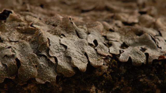 t/l frost crystals growing on stone lichen take 3, uk - brina acqua ghiacciata video stock e b–roll