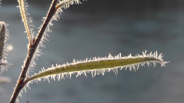 frost crystals on autumn colored leaves and flowers in ovacik district of eastern tunceli province turkey on november 22 2019 - frost stock videos & royalty-free footage