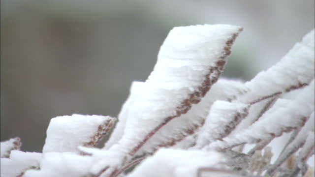 frost ice_daisetsuzan volcanic group in winter, hokkaid_ - daisetsuzan volcanic group stock videos and b-roll footage