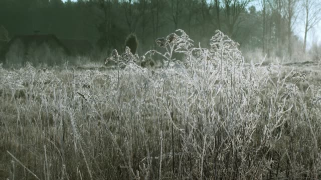 frost in the grass in the morning - frost stock videos & royalty-free footage