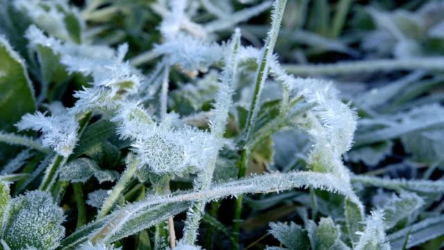 'Frost melting, timelapse'
