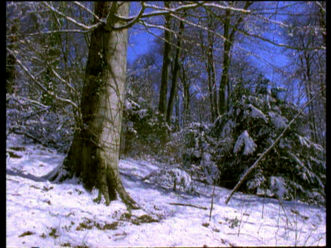 Frost melts in English woodland