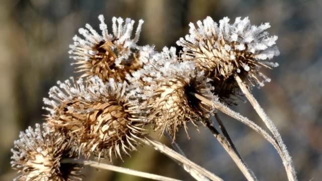 vídeos de stock e filmes b-roll de frost on plants - caule de planta