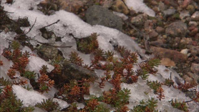 frost on the ground in the north pole tundra - moss stock videos & royalty-free footage