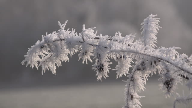 frost on twig - twig stock videos & royalty-free footage
