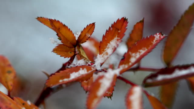 frost with leaf - frost stock videos & royalty-free footage