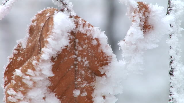 hd: frosted leaves - twig stock videos & royalty-free footage