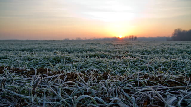 hd time-lapse: frosted meadow at dawn - frost stock videos & royalty-free footage