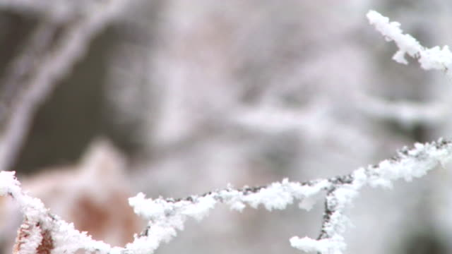 hd: frosted twigs and leaves - twig stock videos & royalty-free footage