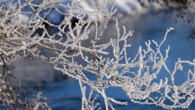 frosty branches with flowing water in the background on a sunny winter day - frost stock videos & royalty-free footage
