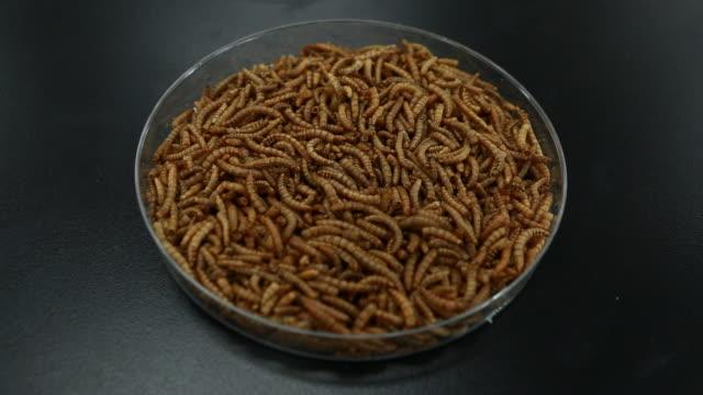 vidéos et rushes de frozen brown mealworm - assiette