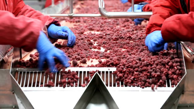 frozen food industry - fruit stock videos & royalty-free footage