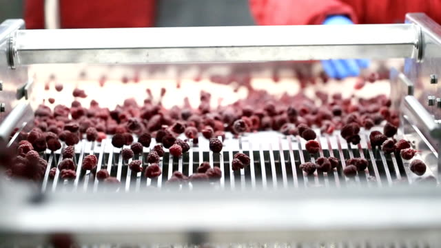 frozen food industry - cibi surgelati video stock e b–roll