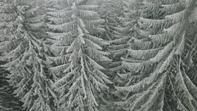 frozen forest, aerial view - fir tree stock videos & royalty-free footage