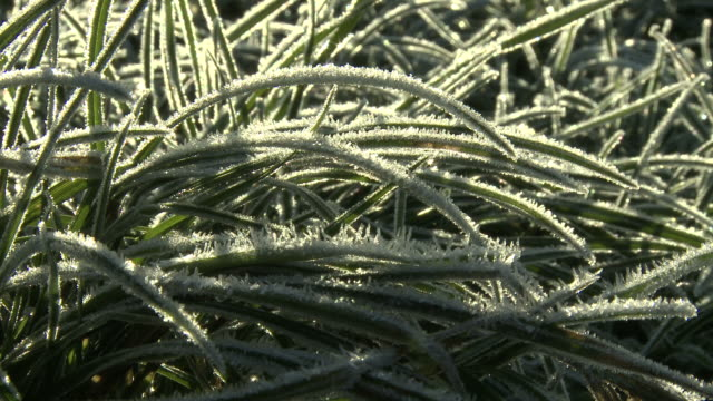 frozen grass thawing, ice turning into water drops, timelapse