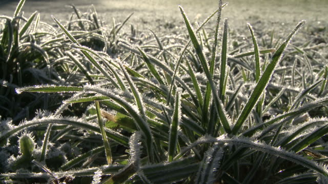 frozen grass thawing, ice turning into water drops