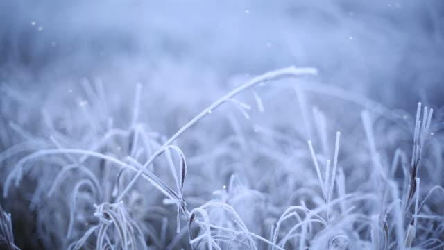 vidéos et rushes de frozen herbe - givre