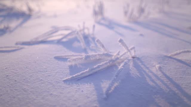 Frozen grass.